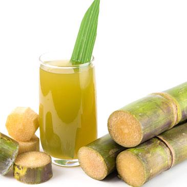 fabrication du sucre à l'île de La Réunion Usine du Gol à Saint Louis